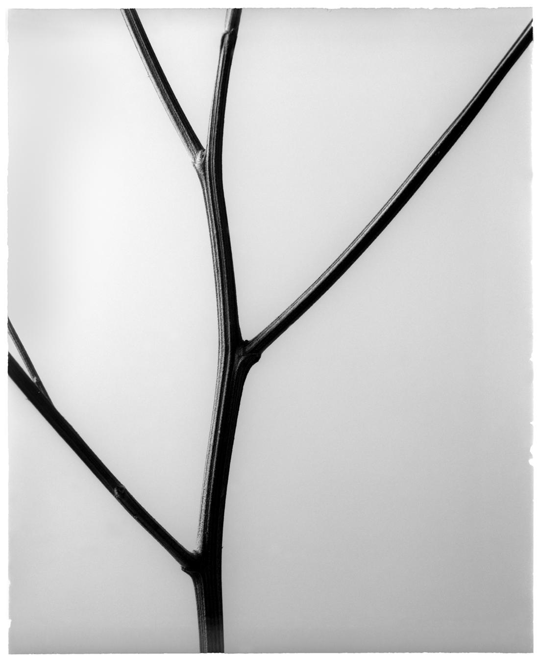 Medium Format Analogue Photography